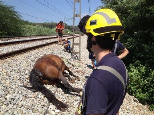 Un tren de Media Distancia arrolla a una manada de caballos en Girona